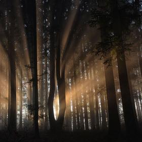 Tanec mezi stromy