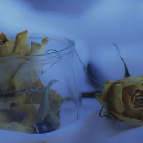 žlutá růže