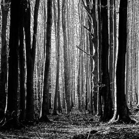 tajemství bukového lesa