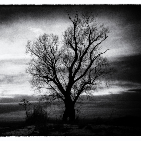 Mystický strom