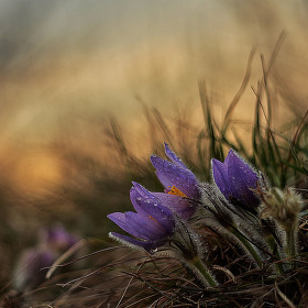 Jarní krásky...