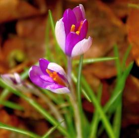Je jaro