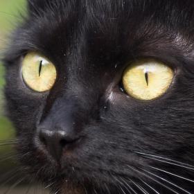 kočka JULIE