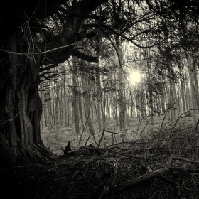 Karkulčin les