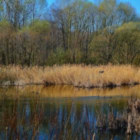 Jaro na Zalužanském rybníku