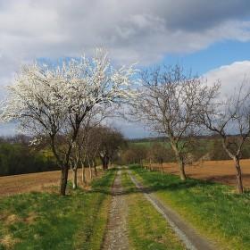cesta jarem