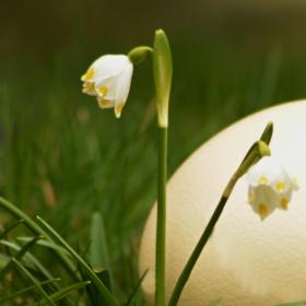 Veselé velikonoce...... :)))