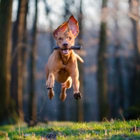 Létající pes :-)