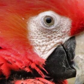 do leva  do prava (papoušek ara)