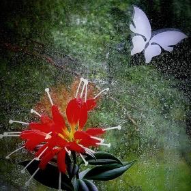 papírový motýl