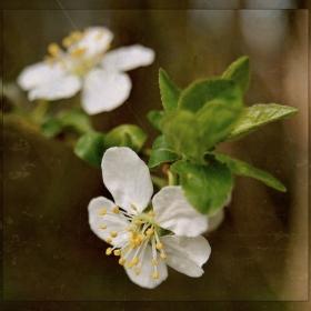 Obraz jara