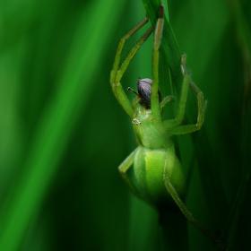 zelený v zelený