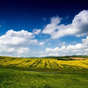 Řepka olejka  a výhled na krajinu
