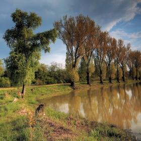 Rybníkové stromoradie