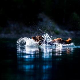 Voda a pes