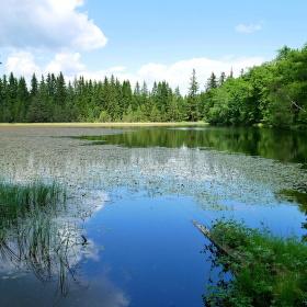 Nový rybník ve Slavkovském lese