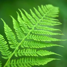 Zelené uklidnění