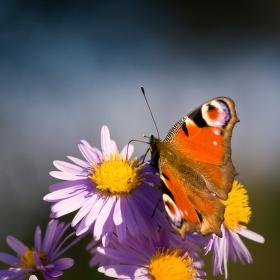 Čas motýlí