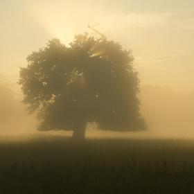 V mlze na Pohansku