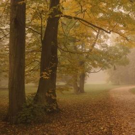 Mlhavo v parku