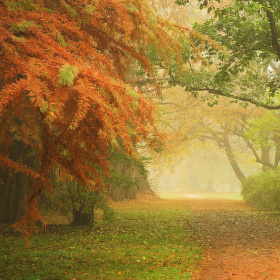 Podzimní mlhavo
