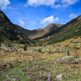 Krokusy na Vall de Sorteny