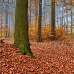 V lesním tichu