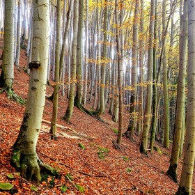 V mladém lese
