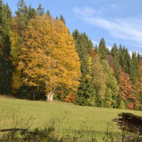 Podzimní Borová Lada