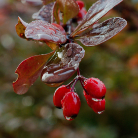 Podzim v barvách