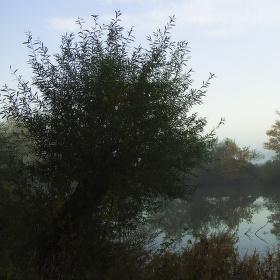 Podzim u řeky Dyje