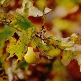 Doteky podzimu 2