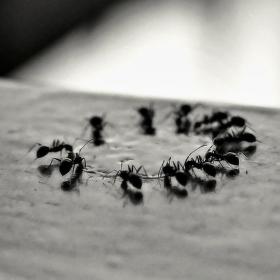 Cvičení mravenci