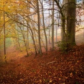 Lesní cestičkou