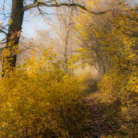 podzim ve zlatém kabátku
