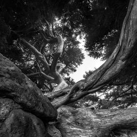 Mělnický prales