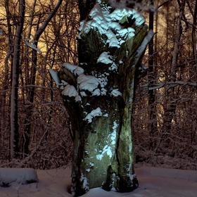 Starý suchý strom
