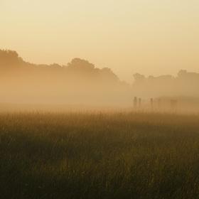Svítání v mlze