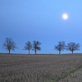 Z aleje zbylo už jen pár stromů...