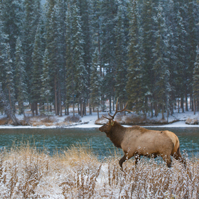 WIldlife in Banff