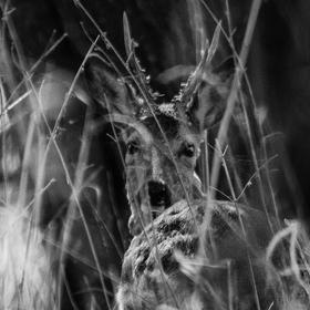 Úkryt v trávě