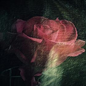 V krajině růžových snů II