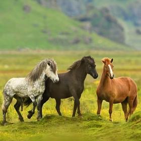 obrázky z islandské přírody (53)