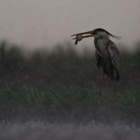 Zaskočená deštěm