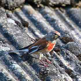 vtáčik