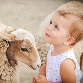 Emička a ovečka