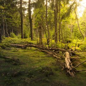 Rýchorsky prales