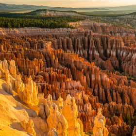 The Hoodoos