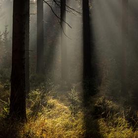 Lesní světlo