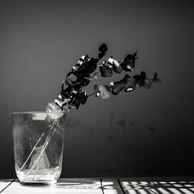 Květ a světlo